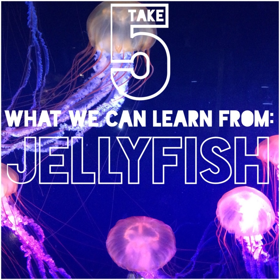 If Jellyfish werecoaches…